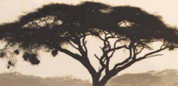 Bushveld Minerals - Interims, Financing Deal and...